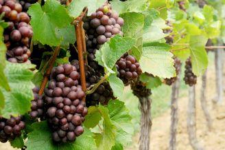 BeWooden - Příběh vína PETIT EDELSPITZ - velké víno v malé lahvi