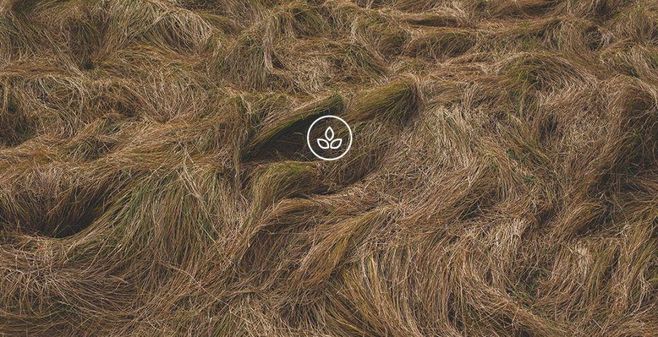 BeWooden - Fotografie přírody s logem udržitelnosti 654bb968d4