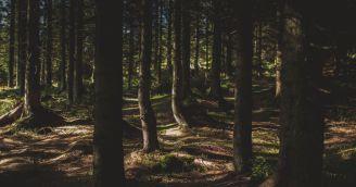 BeWooden - Nejkrásnější beskydské výlety