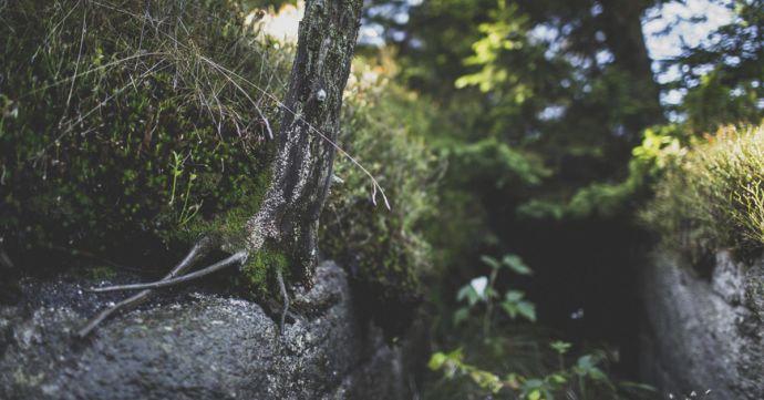 Čistá příroda