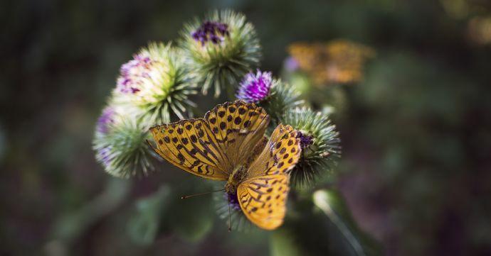 Motýl v přírodě