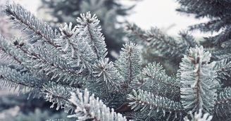 5 způsobů, jak si vybrat vánoční stromeček v souladu s přírodou