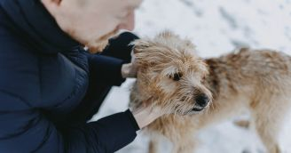 BeWooden - O psích členech našeho týmu