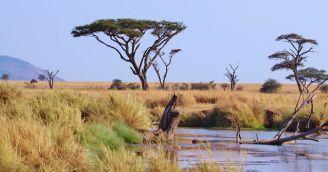 BeWooden - Den Afriky: Jak pomáhá BeWooden africká edice?